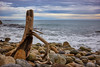 Shag Point-New Zealand-18-09-17-Sage Robinson- (Sage_Robinson_Photography) Tags: shagpoint newzealand coastallandscape rockycoastline stratusclouds dusklight tidialzone waves driftwood