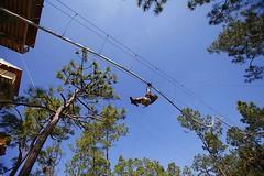Nothing more exciting as soaring through the forest on the #ZipCoaster. More info: http://j.mp/2iHKWL1 (Skywalker Adventure Builders) Tags: high ropes course zipline zipwire construction design klimpark klimbos hochseilgarten waldseilpark skywalker