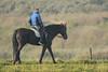 Ruiter - De Banken (Jan de Neijs Photography) Tags: ruiter paard horse strand sgravenzande westland hetwestland zuidholland tamron tamron150600 tamron150600g2 g2 150600 animal ruitertepaard dier horserider rider pferd reiter