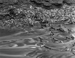 A Gently Running Stream (Alex Luyckx) Tags: oakville ontario canada mccraneyvalley trail park greenspace urbanpark nature hike walk lunchhour closeup detail graflex pacemakercrowngraphic crowngraphic presscamera 4x5 largeformat schneiderkreuznachsymmars156210 ilford ilfordfp4 fp4 asa125 bw blackwhite blazinal rodinal 1100 standdeveloped handsoff stand pentaxspotmeterv epsonv700 adobephotoshopcc film filmphotography believeinfilm filmisalive filmisnotdead fp4party