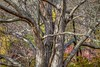 Bark (Paul Rioux) Tags: nature tree bark branches detail pattern colour foliage plant prioux forest