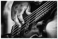 Let Your Fingers do the Walking (Robert Streithorst) Tags: bass guitar instrument mono musical oasisoftheseasrobertstreithorst strings walking yamaha