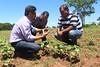 IMG_3193 (Cooperacion Brasil-FAO) Tags: algodón proyecto cooperaciónsursur brasilfao paraguay utd unfao visita