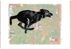 Racing to Christmas Day (Karen McQuilkin) Tags: zeke racingtochristmasday wreath run pup race 4monthsold