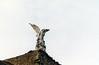 Ángel caído en el cementerio (jperezrod) Tags: zenit zenitem analogic film analogico carrete angel angelcaido escultura sculpture cementery cementerio comillas cementeriodecomillas