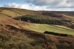 Yorkshire beauty (paul indigo) Tags: autumn paulindigo yorkshire colour field forest hill horizontal landscape slope travel trees wall