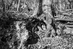Eden Valley (Phil Roeder) Tags: clintoncounty edenvalley iowa nature park naturereserve blackandwhite monochrome leica leicax2