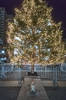 holiday tree, washington square park (Charley Lhasa) Tags: ricohgrii grii 137mm 21mm35mmequivalent iso6400 ¹⁄₈₀secatf28 0ev aperturepriority pattern noflash r022176 dng uncropped taken171225210419 uploaded171230052213 4stars flagged adobelightroomclassiccc71 lightroomclassiccc71 adobelightroom lightroom decorations greenwichvillage holidaytree washingtonsquarearch washingtonsquarepark xmscd xmscd18 newyork unitedstates us charley charleylhasa lhasaapso dog night evening tree christmastree lights arch wsp nycparks citypark urbanpark manhattan newyorkcity nyc ny tumblr171231 christmas christmasday httpstmblrcozpjiby2tzsgjk