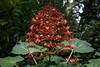 Red Tree (CamposPedro) Tags: museu museum mg minasgerais brasil brazil eunonatgeo natgeobrasil canonbrasil canonbr canon inhotim rainforest forest florestatropical mataatlântica planta plant red green vermelho verde flower redflower flor florvermelha