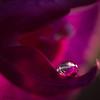 La petite perle... (ju.labs) Tags: macro perle drop goutte focus canon canon70d 100mmf28macro couleurs colors purple reflet lumière light finegold