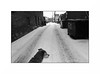 in the alley (anthonyaicardi) Tags: dog snow chicago blackwhite monochrome alley winter ricohgrd