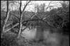 riverside, trees, one overhanging, French Broad River, Carrier Park, Asheville, North Carolina, Olympus XA, Rollei RXP 400, Moersch Eco Film Developer,  12.30.17 (steve aimone) Tags: riverside trees reflections river frenchbroadriver carrierpark asheville northcarolina olympusxa rolleirxp400 moerschecofilmdeveloper 35mm film rangefinder landscape blackandwhite monochrome monochromatic urbanpark