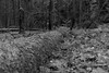 IMG_0085-2 (Le Radiophare) Tags: czech republic vsemly ceska kamenice srbska forest autum january intercamp ferdinanda