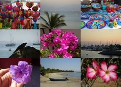 Mexico (Day 1) (France-♥) Tags: collage mosaic mexico mexique fleur flower life art market bay baie lacruz nayarit