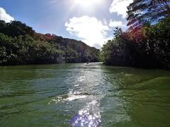 Wailua River State Park - Fern Grotto (92) (pensivelaw1) Tags: hawaii kauai wailuariverstatepark ferngrotto