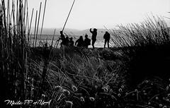282. FRIENDS: Selfie Snap (Meili-PP Hua 2) Tags: grass weeds beach dunes dune shoreline coastal marine sanddunes people shadows silhouettes hills sunset coastalflora coastalgrasses coastalgrass coastalbotanicals dunegrass dunegrasses beachvegetation beachflora duneflora beachgrass beachgrasses mlpphnature mlpphflora sky blackandwhite blackandwhitephotography monochrome blackwhite whiteblack bw monochromatic gray grey white black mlpphbwphotos photographypassionsxyz