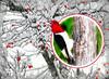 The Opportunist (bethrosengard) Tags: bethrosengard photomanipulation digitallyenhanced photoart digitalmagic digitalart