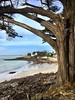 Sur le chemin de port Navalo (pileath) Tags: path chemin beach plage portnavalo océan pinmaritime