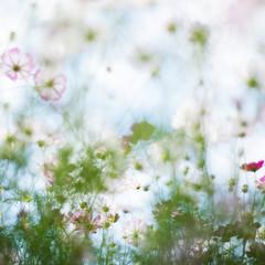 Dream (kietbull) Tags: dream nightmare all blossom blooming kietbull field fortune amaranth