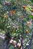 Metochi Kykkou Gardens  (11) (Polis Poliviou) Tags: environment relax relaxing calming cyprus life living enjoyable colour colourful mediterranean travel walking trekking rural countryside agricultural winter flowers plant floral flora winterblossom botany bulbs landscape green white wallpaper herbs naturepics naturephotography beautyinnature cyprustheallyearroundisland cyprusinyourheart yearroundisland zypern republicofcyprus κύπροσ cipro кипър chypre ©polispoliviou2018 polispoliviou polis poliviou πολυσ πολυβιου metochikykkoy kykkos olive monastery christianity
