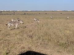 2017-12-28 17.16.24 (dcwpugh) Tags: travel nairobi kenya safari nairobinationalpark