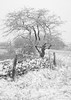 Drystone Snow (Sarah_Brooks) Tags: green snow snowing mendip somerset wookeyhole deerleap landscape tree drystonewall fence white