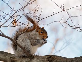 olY/319 .. happy squirrel!