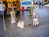 Bregenz - Der Wiehnachtsausflug (noa1146) Tags: bregenz weihnachtsmarkt seebühne carmen schnee christkindlsmarkt bodensee vorarlberg