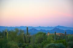 Sunrise over cactus (PierTom) Tags: scottsdale