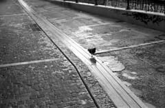 Walking down the road (Nikos.K.) Tags: 2017 athens greece monastirion monastiraki bird pidgeon rain blackandwhite film ilfordfp4 expired olympusom2n zuiko 50mm18 homebrewdeveloper d76