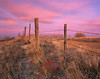 Barbed Wire Sunrise (AlexBurke) Tags: colorado plains prairie fence landscape sunrise pink film 4x5 large format fuji provia