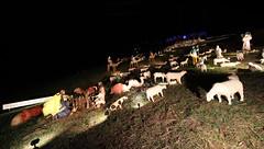 Sundar Shadi holiday display 2017 (lenswrangler) Tags: lenswrangler digikam elcerrito sundarshadi shadiholidaydisplay sundar shadi holiday christmas angel sheep shephard star wisemen camel dog flock amimal grass sky night people