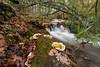 An Ordinary Place (Jon Ariel) Tags: helen georgia northgeorgia ga forest creek rain