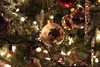 Christmas 201700088 (Exit Zero Photography) Tags: kelly mercer exitzero kellymercer kellymercerhalifax kellymercerphotos christmas