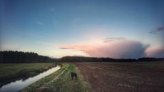 A cold December morning (Jos Mecklenfeld) Tags: totoro dutchshepherd dutchshepherddog hollandseherder hollandseherdershond landscape ruitenaa river clouds winter sonyxperiaz5 xperia