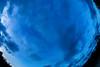 Kinabatangan River (Phalinn Ooi) Tags: sepilokorangutanrehabilitationcentre sunbear sepilok rainforestdiscoverycentre rainforest jungle wildlife sandakan kinabatangan river sukau bilit sabah borneo malaysia asia nature outdoor adventure safari holiday animal orangutan proboscis monkey silverleaf lutung langur crocodile snake monitorlizard boat labukbay myne resort canon eos dslr photography egret bird wanderlust travel family beautiful view love wife trekking macro flower insect tree forest 5dmarkiv beardedpig water cruise alam world scenery flora fauna megadiverse biodiversity landscape people sexy woman coutinho