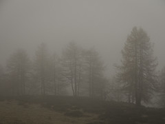 Petricor (Lumase) Tags: petricor fog rain november trees larch wood forest