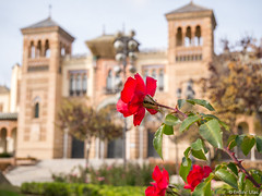 Red beauty (✦ Erdinc Ulas Photography ✦) Tags: flower red green panasonic focus bokeh grass plant tree leaf park spain sevilla españa museum arts traditions building landmark garden stone architecture brick sky stair door