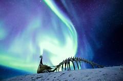 The Northern Light strikes Drakkar (5orenso) Tags: auroraborealis polarnight arctic vardø finnmark norway drakkar sculpture winter nightscape sky stars nothernlight