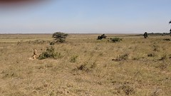 2017-12-28 14.49.51 (dcwpugh) Tags: travel nairobi kenya safari nairobinationalpark