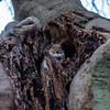 2017-12-02-0103 (Kevin Maschke) Tags: london fuji fujifilm fujifilmxt2 fujixt2 fujix city londoncity londonstreets nature outdoors air freshair squirell animal wildlife