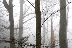 after the Storm (Rosmarie Voegtli) Tags: trees storm stems mist brume nebel sturm arbres alberi baum bäume arlesheim dornach 118picturesin2018 57