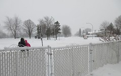 ** Notre première tempête de neige ** (Impatience_1 (peu...ou moins présente...)) Tags: tempêtedeneige snowstorm neige snow arbre tree gens people clôture fence paysage landscape m impatience 12décembre2017 camion truck rue street saveearth abigfave