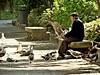 Compañía aérea (Franco D´Albao) Tags: fujifilmfinepixhs50exr francodalbao dalbao park anciano oldman aves birds animals gaviotas seagulls compañía company