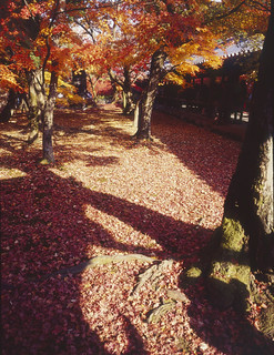 東福寺/Kyoto