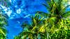 DSC01963 (Ben De Guzman) Tags: hdr coconuts philippines lingayen