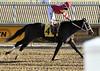 "2017-12-26 (63) r5 Christian Hiraldo on #4 Dance or Stroll (JLeeFleenor) Tags: photos photography ""laurel park"" maryland md ""maryland races"" horse jockey جُوكِي ""赛马骑师"" jinete ""競馬騎手"" dżokej jocheu คนขี่ม้าแข่ง jóquei žokej kilparatsastaja rennreiter fantino ""경마 기수"" жокей jokey người horses thoroughbreds equine equestrian cheval cavalo cavallo cavall caballo pferd paard perd hevonen hest hestur cal kon konj beygir capall ceffyl cuddy yarraman faras alogo soos kuda uma pfeerd koin حصان кон 马 häst άλογο סוס घोड़ा 馬 koń лошадь laurelpark marylandraces races outdoors outside winter cold"