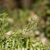 Praying Mantis (Heidi Prichard) Tags: praying mantis moss lichen calofulcinia fern