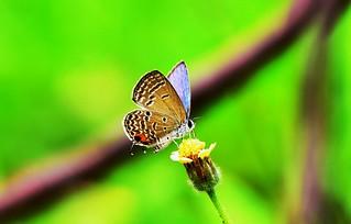 Butterfly on little flower
