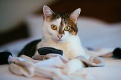 Ella's sock pile (Garen M.) Tags: dogs sb910 jill buttercup portraits nikond850 companionanimals jojo chicklet nikkor85mmf14 cats ella